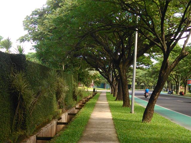 pepohonan-tinggi-di-rumah